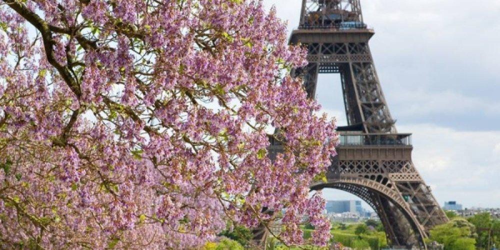 Когда цветут каштаны в Париже?