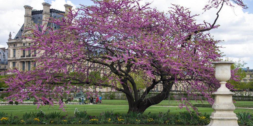 Погода в Париже в апреле