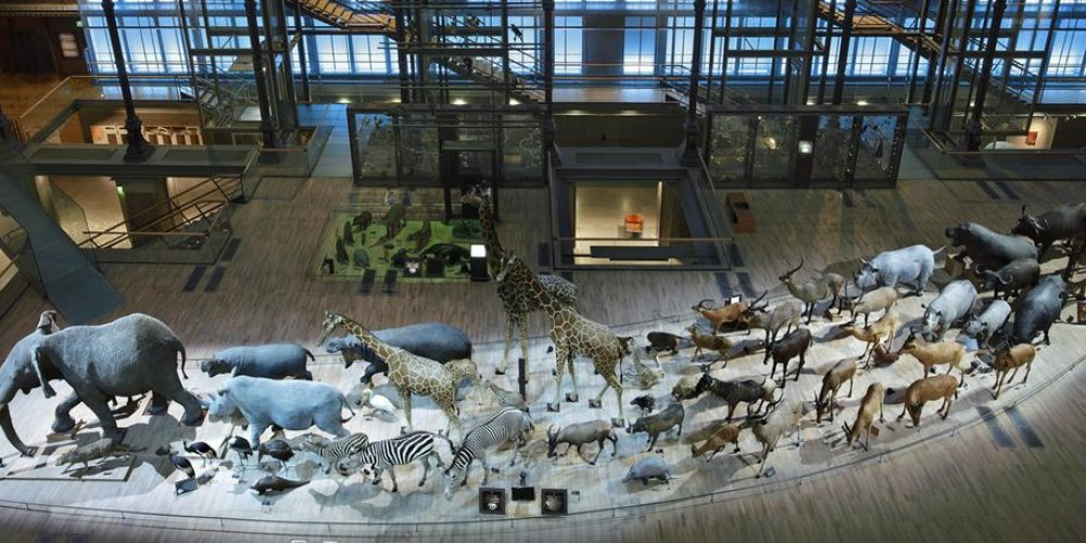 Большая галерея эволюции