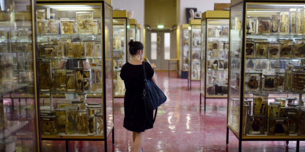 Музей Дюпютрена