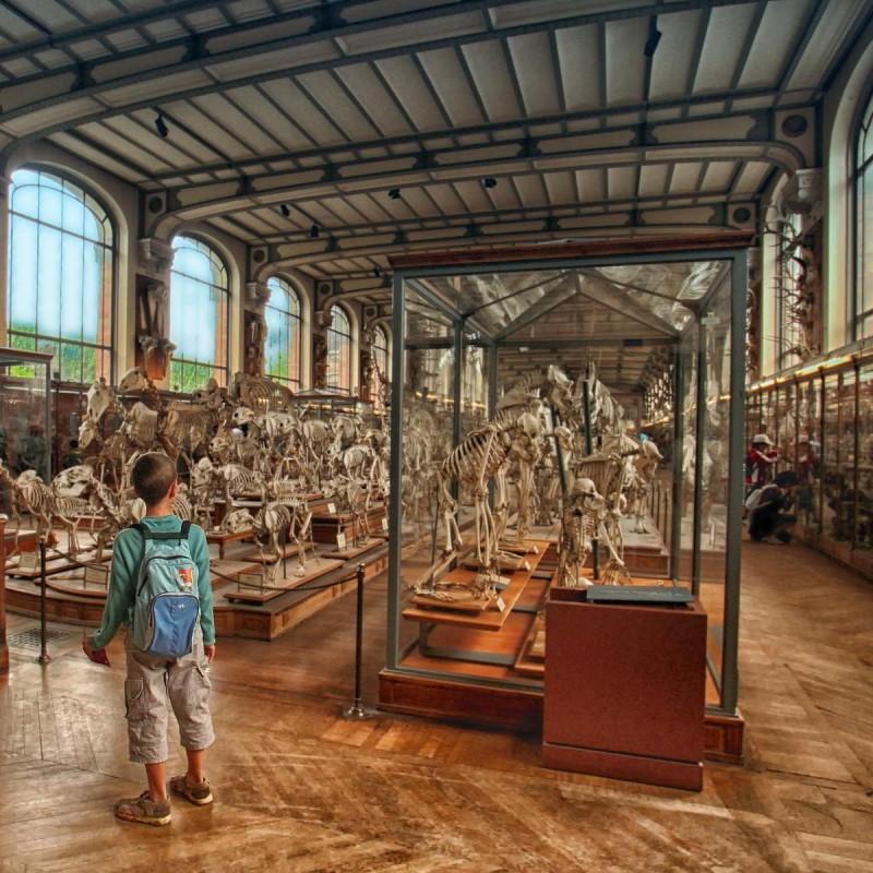 Большая галерея эволюции3