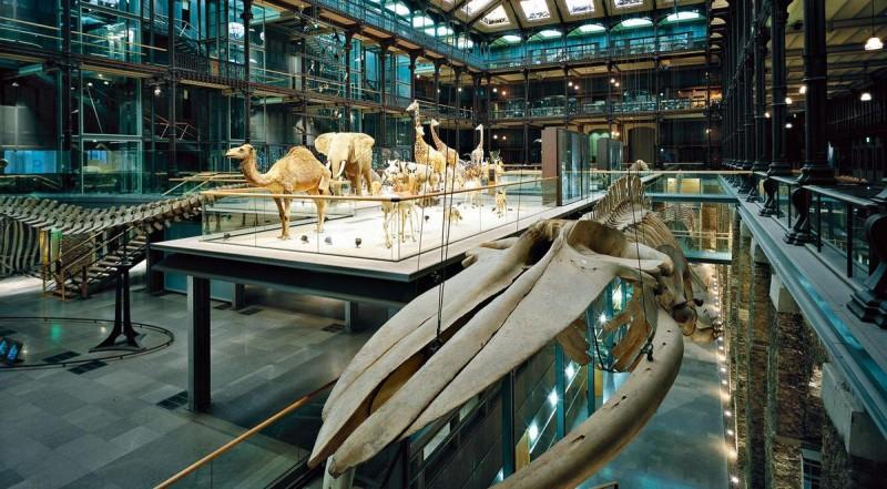 Большая галерея эволюции4