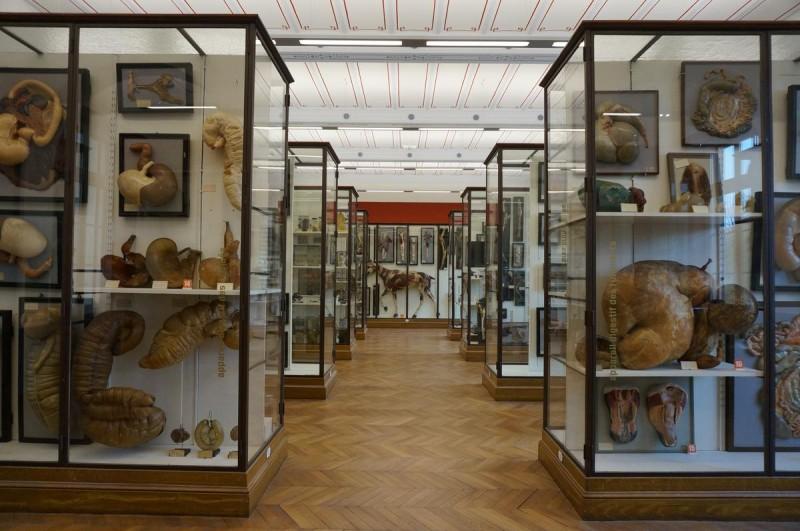 Музей охоты и природы4