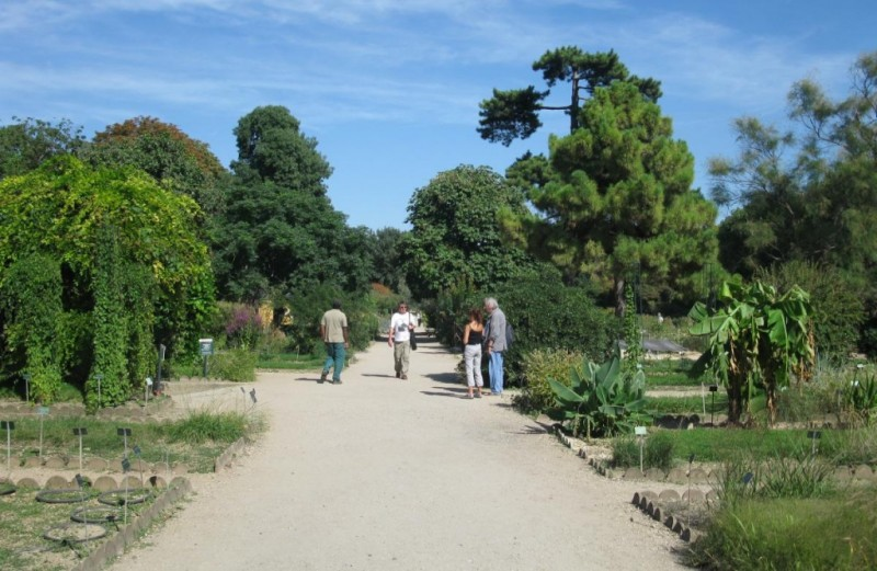 Сад растений в Париже - аллея