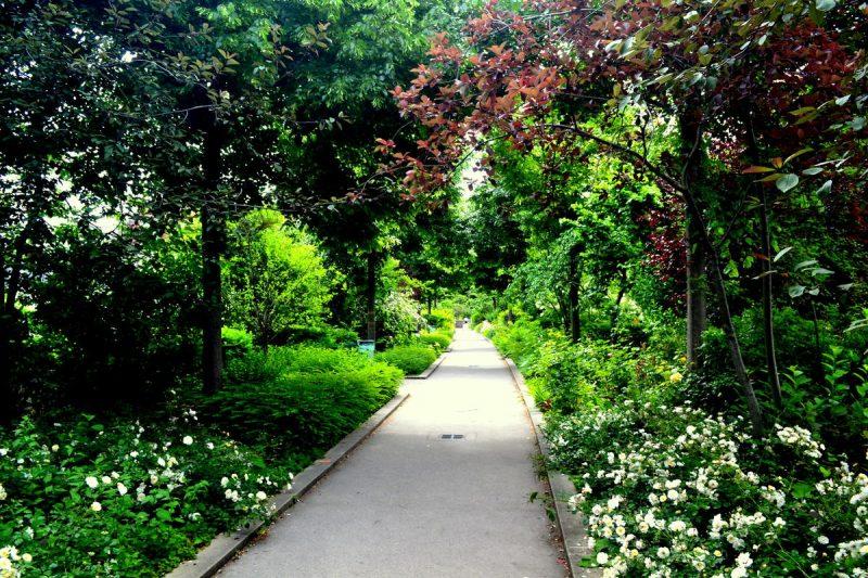 Зеленая аллея в Париже 4