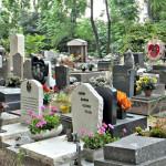 Кладбище собак (2)