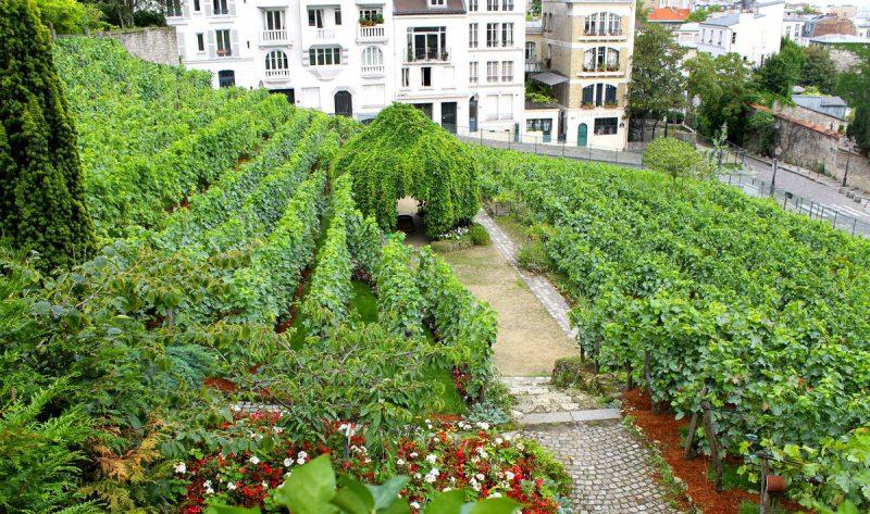 vinogradnik-monmartra