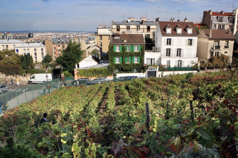 vinogradnik-monmartra3